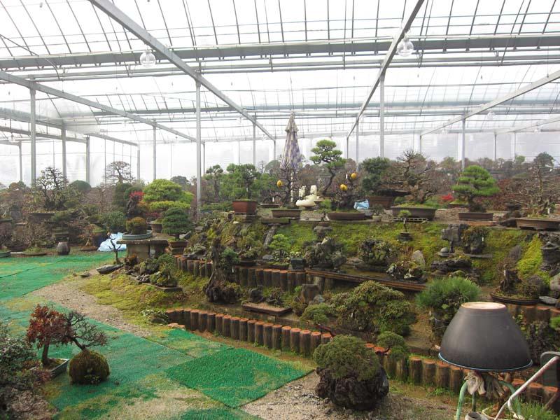 Image Result For Seoul Garden Olive