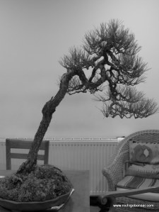 An film noir look at this bunjin tree after the work.